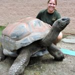 Zoo Keeper with tortoise