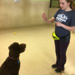 Celebrate Small Business – Canine Training and Boarding
