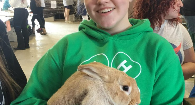 Multiplying Learning, Rabbit Style…4-H Rabbit Project Curriculum