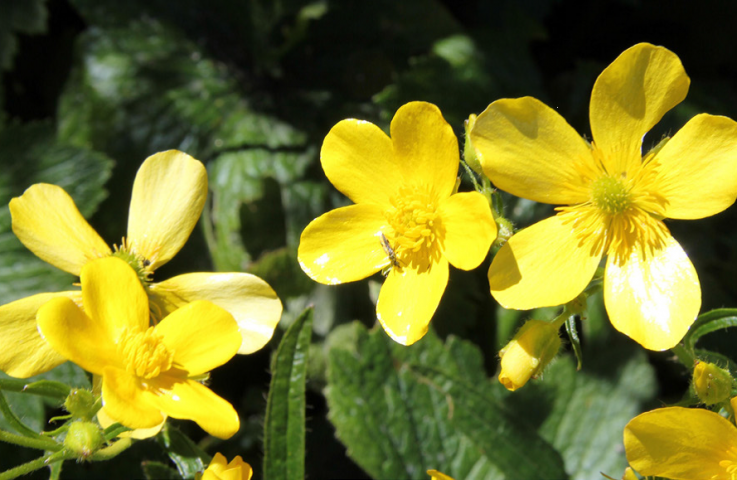 April showers bring spring flowers – but are they poisonous to your horse?