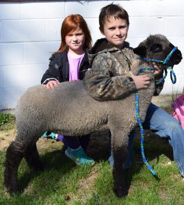 4-H Member Patrick Kelly with his Suffolk market lamb.