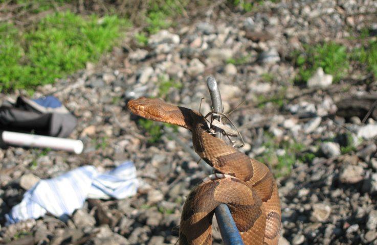 Poisonous vs. Venomous – What's the difference?