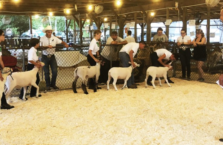 The Importance of Show Ring Etiquette