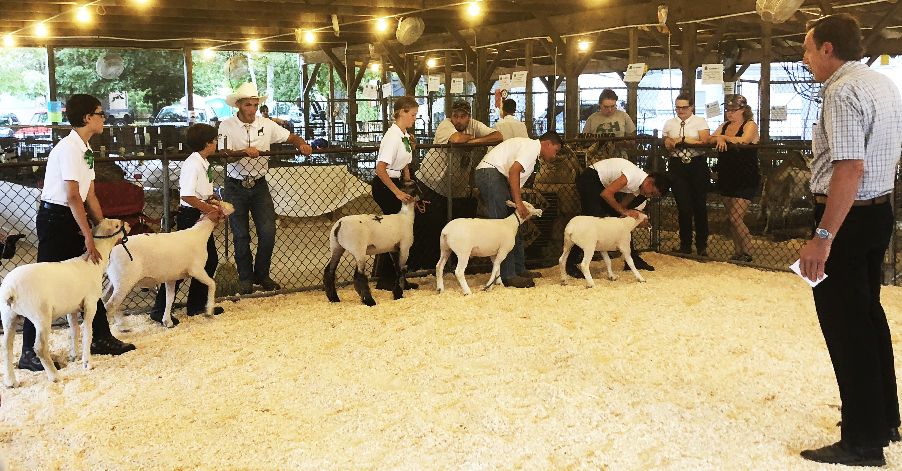 Judge Jeff Bringhurst, of Bringhurst Meats in Berlin, NJ looks over the Lamb Showmanship Class at the 2018 Cape May County 4-H Fair.