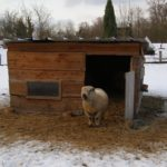 Getting Your Sheep Barn Ready for Winter
