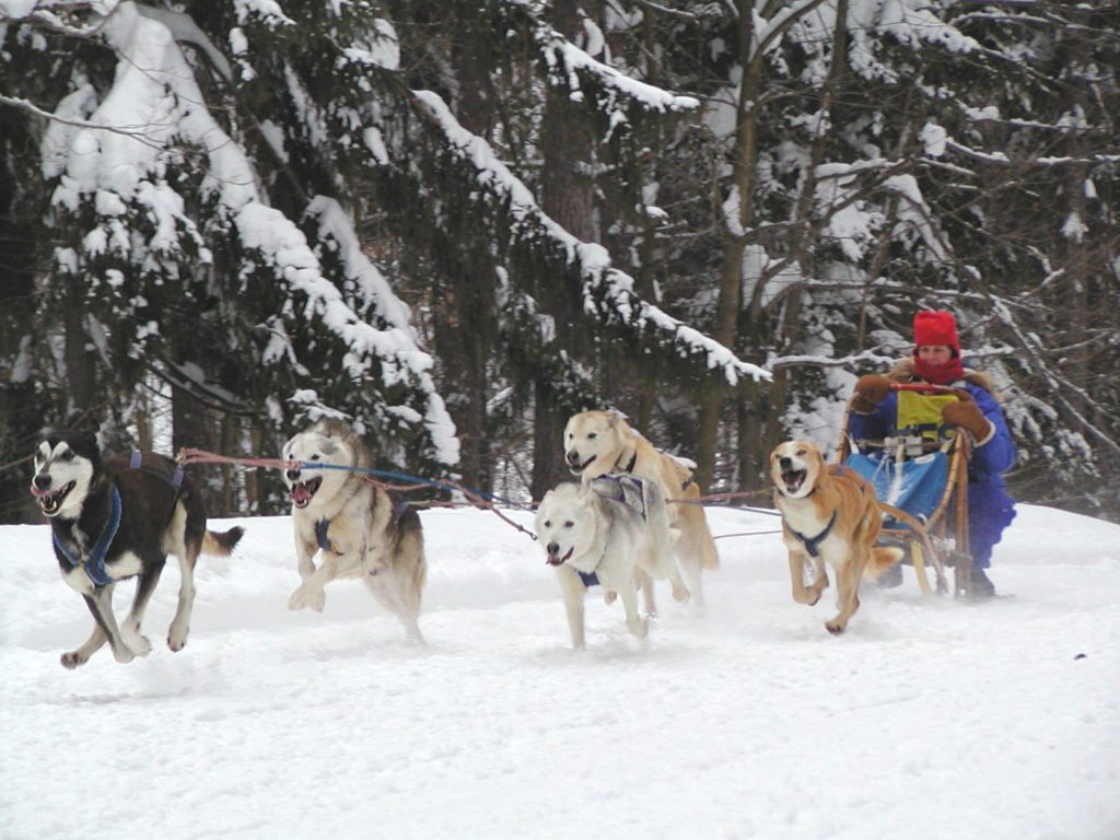 Dog sled team racing through snow.
