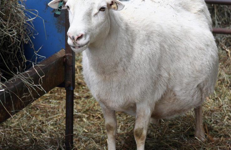 Preparing for Lambing