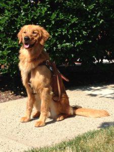 Seeing Eye dog ready to serve.