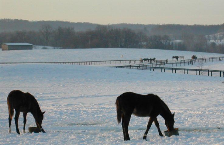 Winter Feeding for Horses