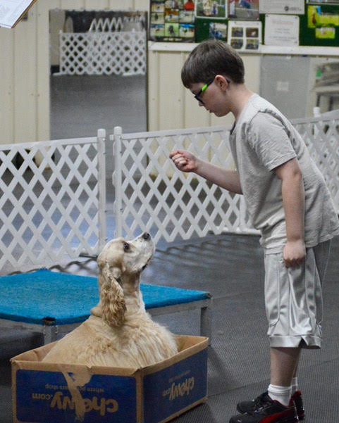 Boy perfecting a dog's trick to sit in a box.