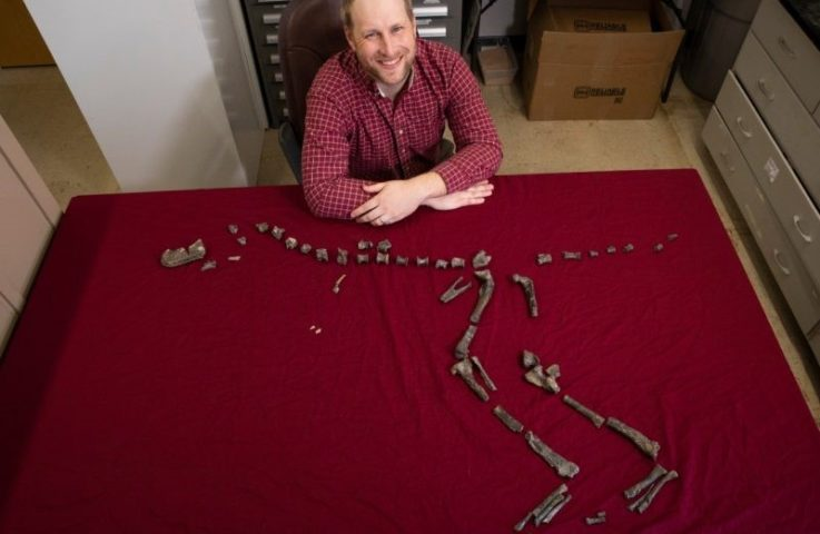 Virginia Tech paleontologist finds, names new 3-foot-tall relative of Tyrannosaurus rex