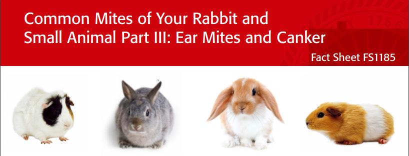 Rabbit Ear Mites and Canker