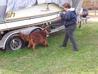 Dog inspects boat.