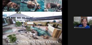 Otters visit us on zoom