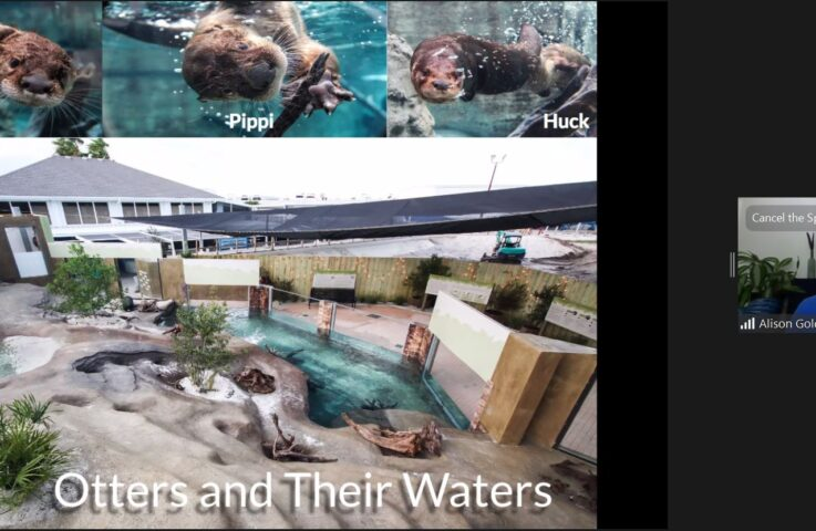 Virtual Zoos Offer Animal Science at Home