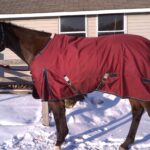 Horse with Winter blanket