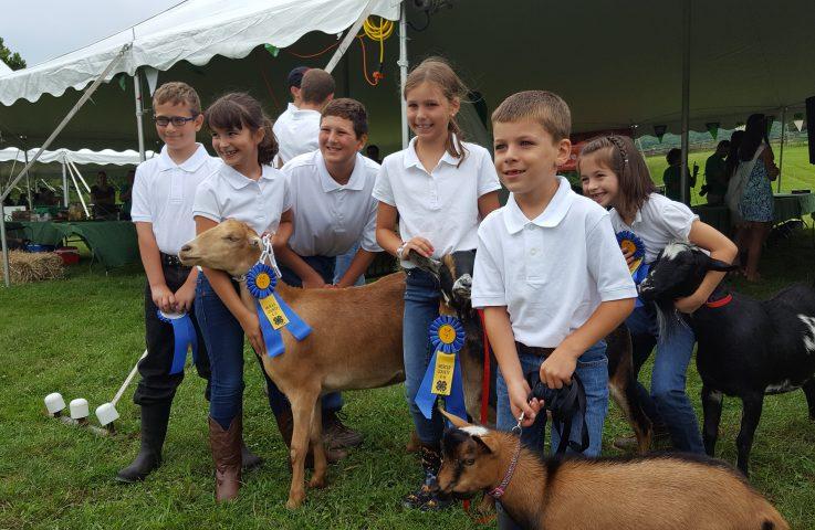 Mercer 4-H Invitational Goat Showmanship – July 31
