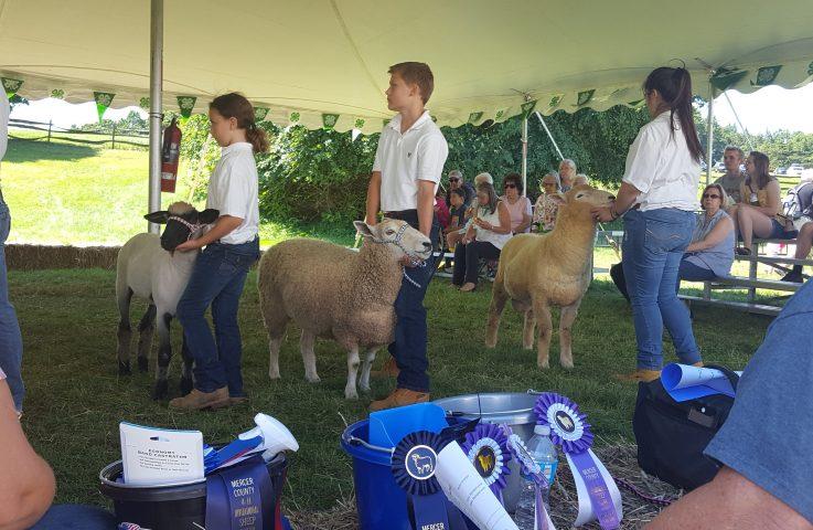 Mercer 4-H Invitational Sheep Show – August 1